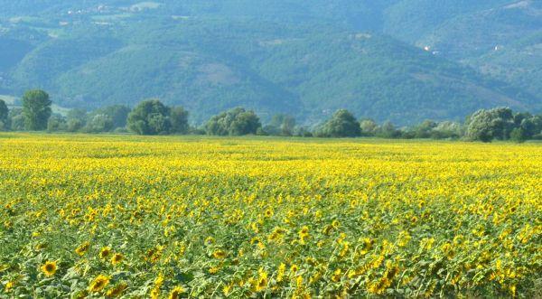 paesaggio rurale - Protectaweb
