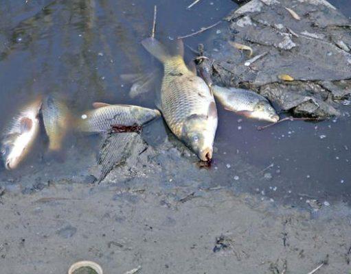 inquinamento mercurio